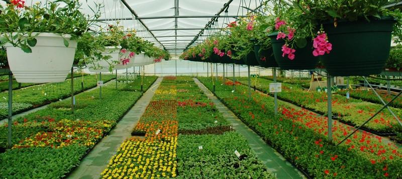 plants-fleurs