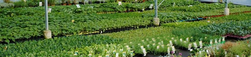 plants-legumes